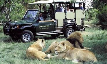 Descubrí África, mira nuestros paquetes turísticos